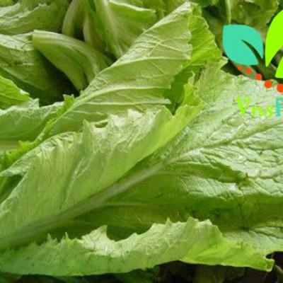 Rau cải canh